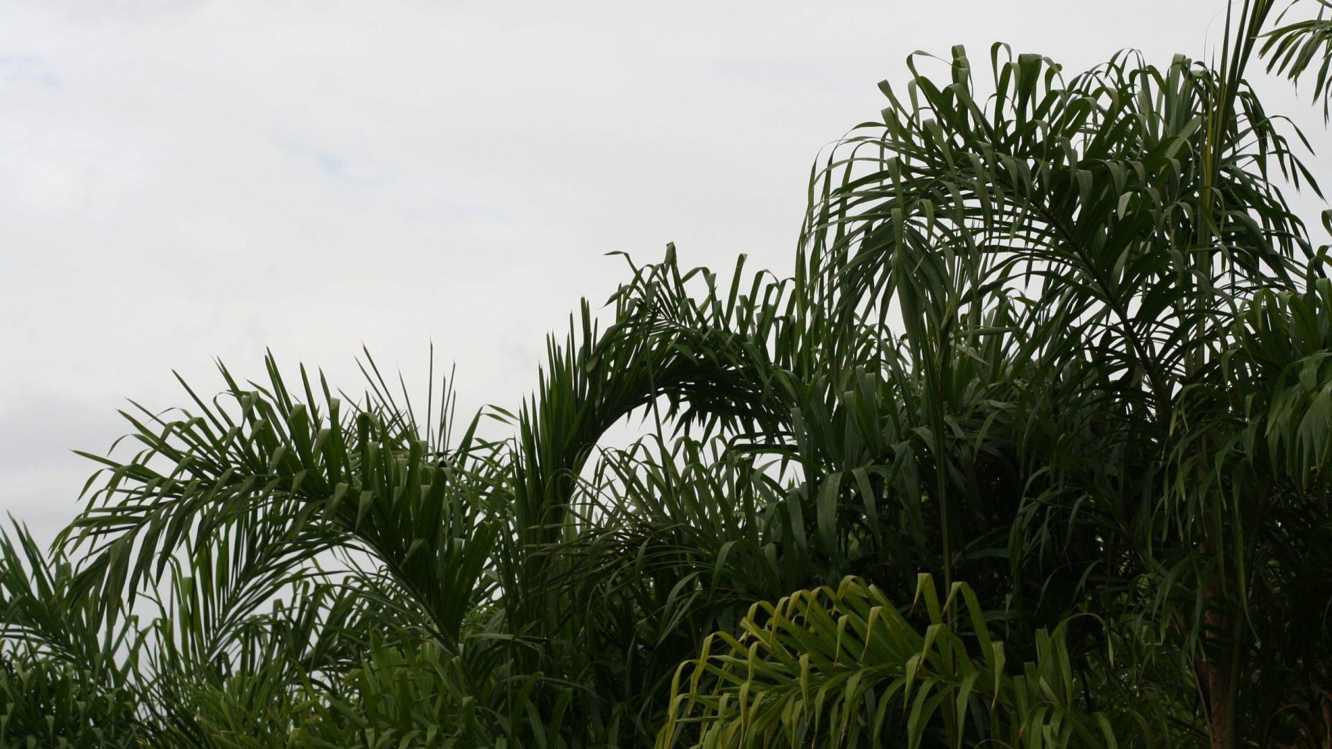Puna Gardens